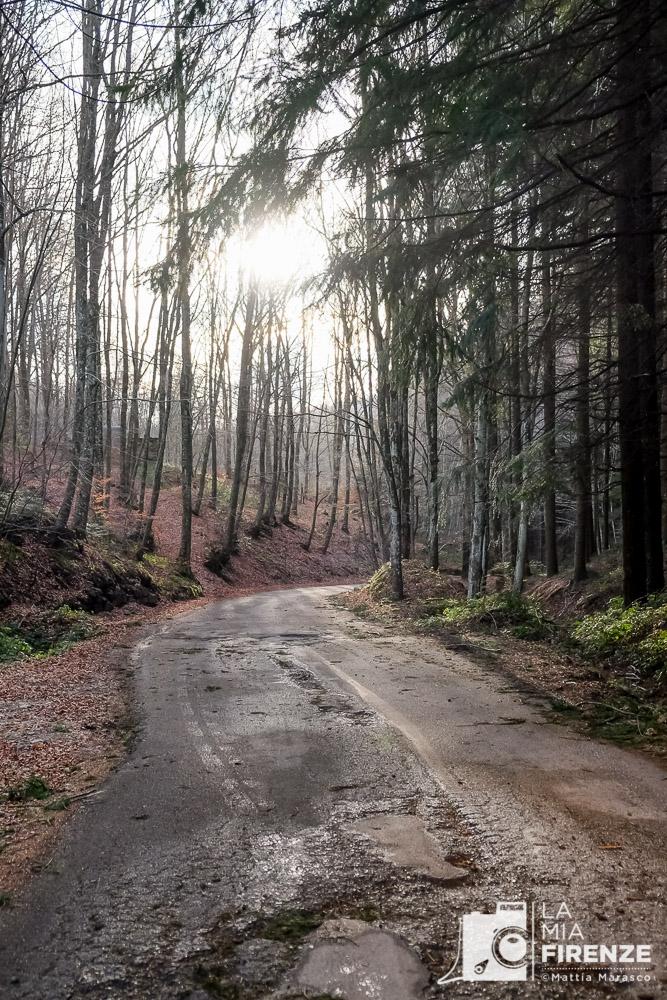 lamiafirenze-mattiamarasco-allrightsreserved-2556