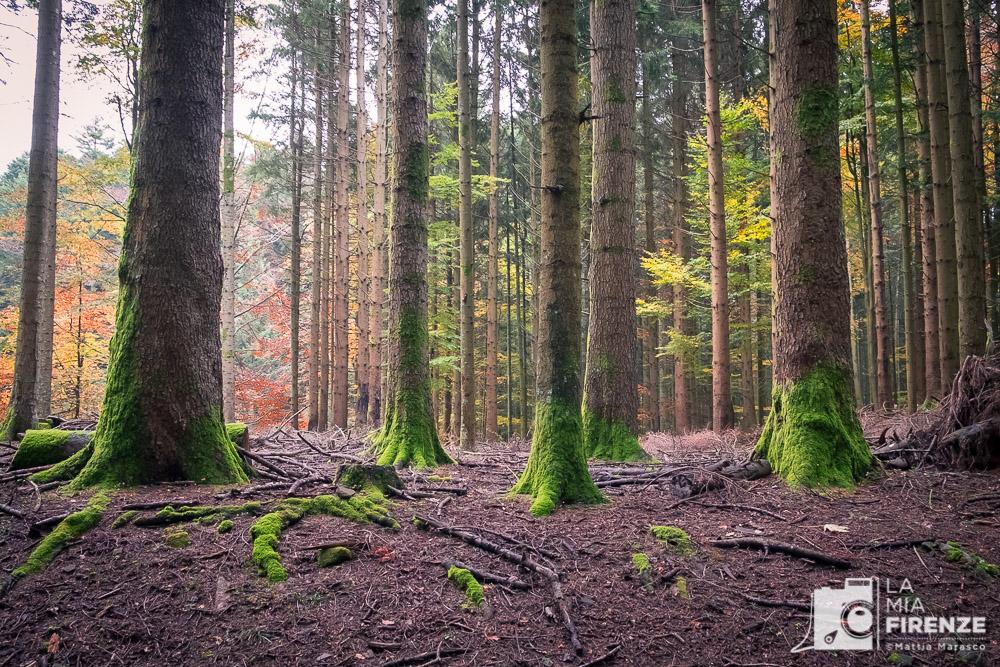 lamiafirenze-foreste-casentino-mattiamarasco-allrightsreserved-6129