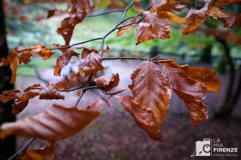 lamiafirenze-foreste-casentino-mattiamarasco-allrightsreserved-6132